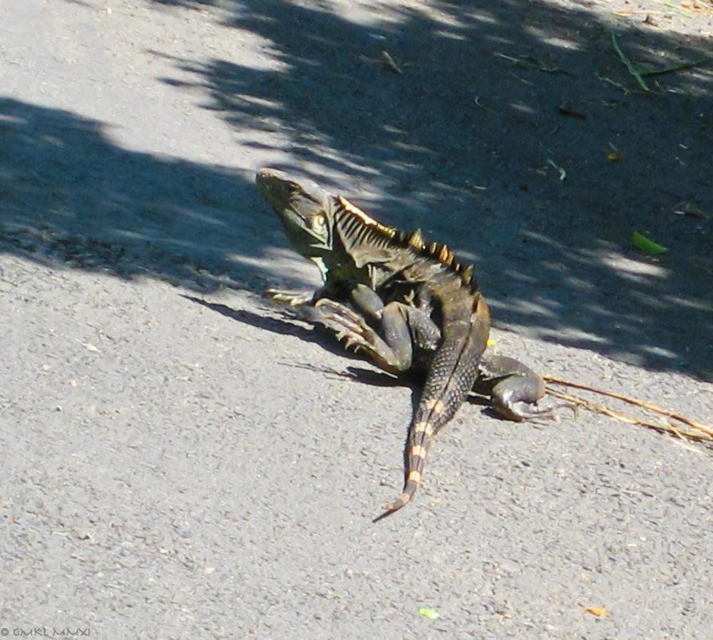 5b879-iguanaskin02_lr-7960