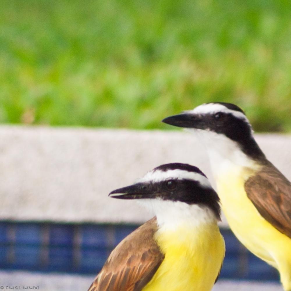 6dad4-squawkeroplusone01-lr-1040811