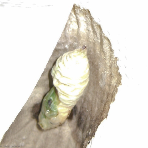 e2a15-olivemariposa03-lr-1120