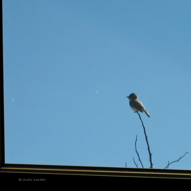 0b4eb-birdspring01-lr-1523