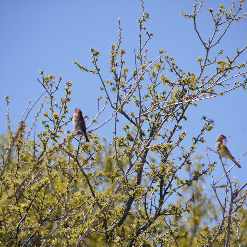 e3cab-oakbirds01-lr-1040965