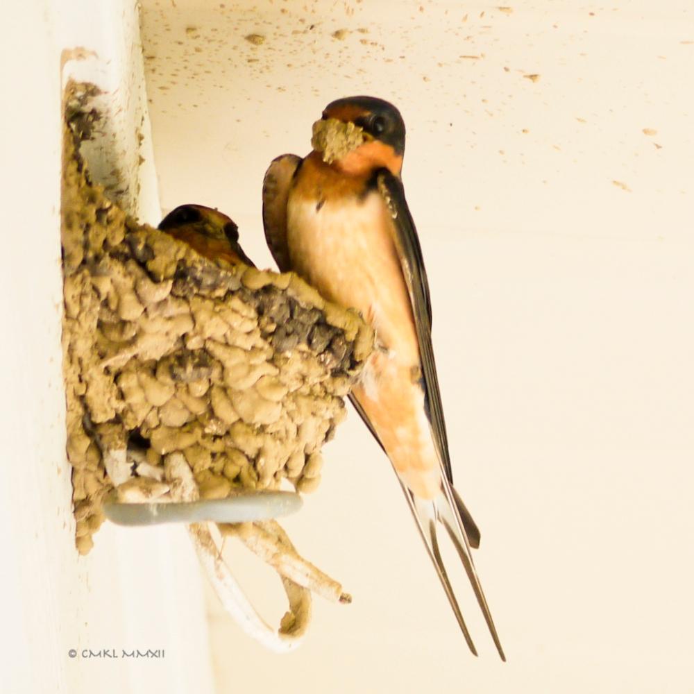 e3d68-nestbuilding-03-30-2012-lr-1050076