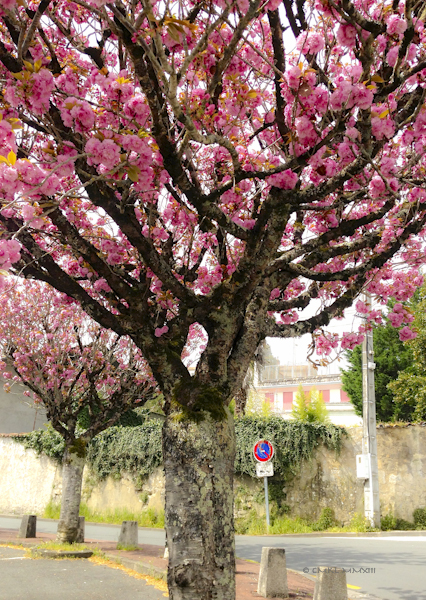 34d2e-saintes-treeflowers-02-0617