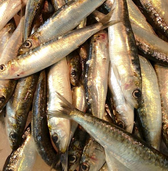 88ca1-saintes-sardines-0561