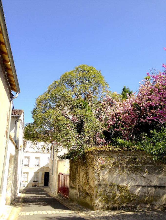 c1a43-jardinpublic-10-0860