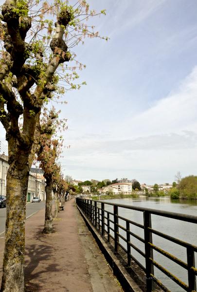 f2ea2-saintes-treeflowers-01-0614