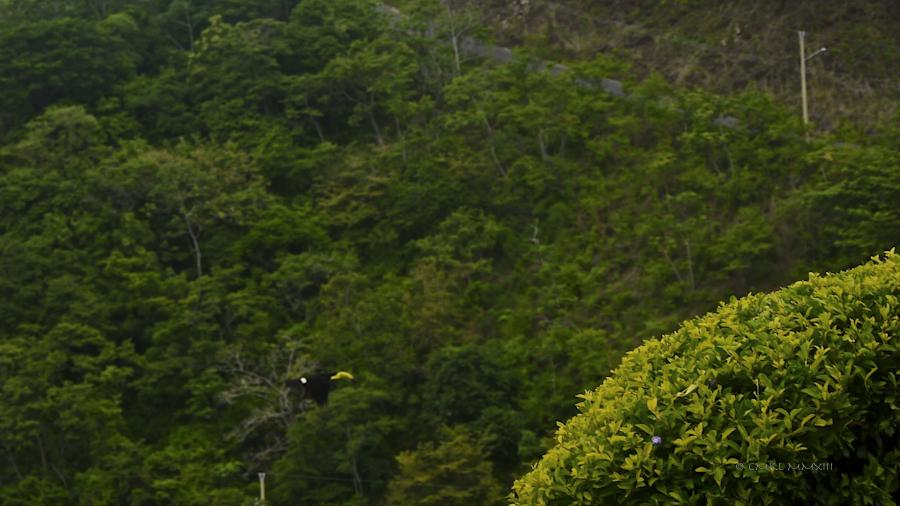 6b01e-toucan-02-1150942