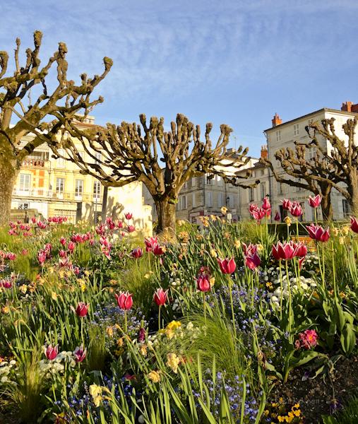f6d70-flowerbeds-0641