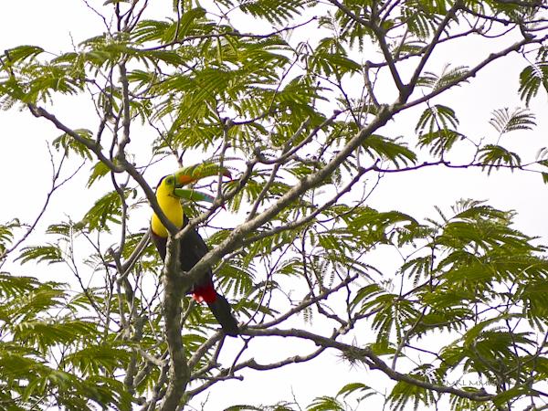 6475e-toucan-05-1160208