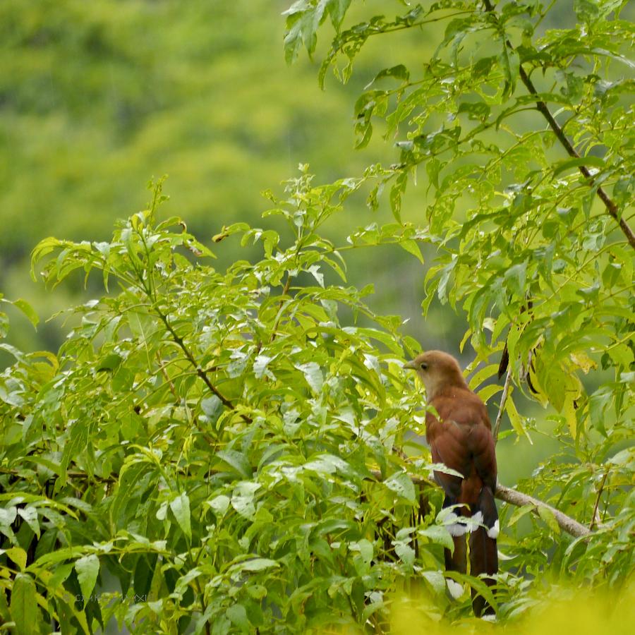 78dc6-birding-07-1170642
