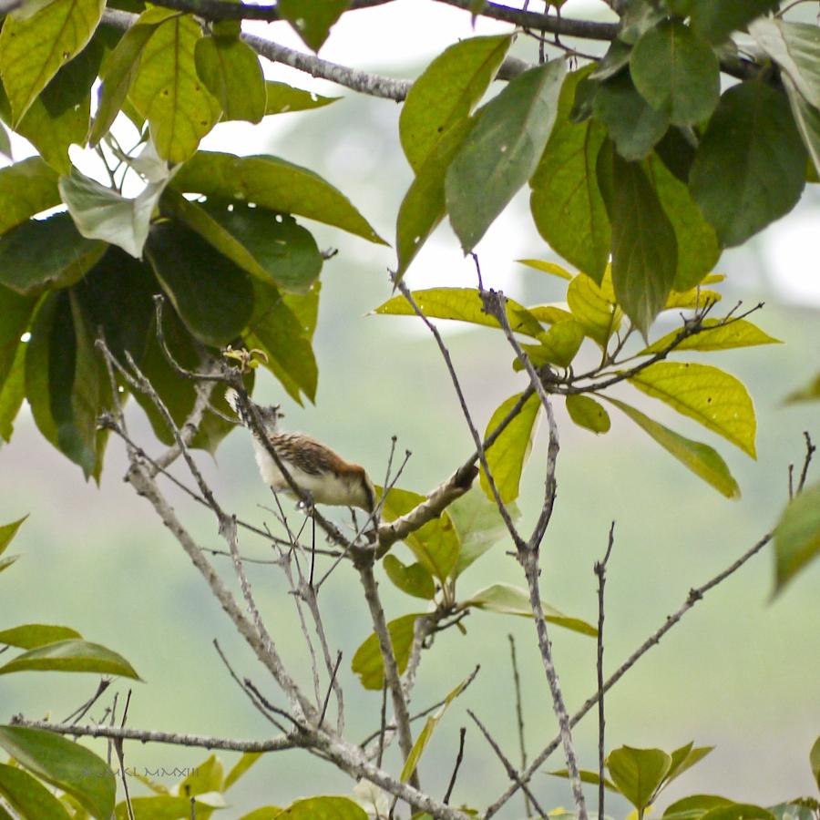 93eaa-birding-02-1170635