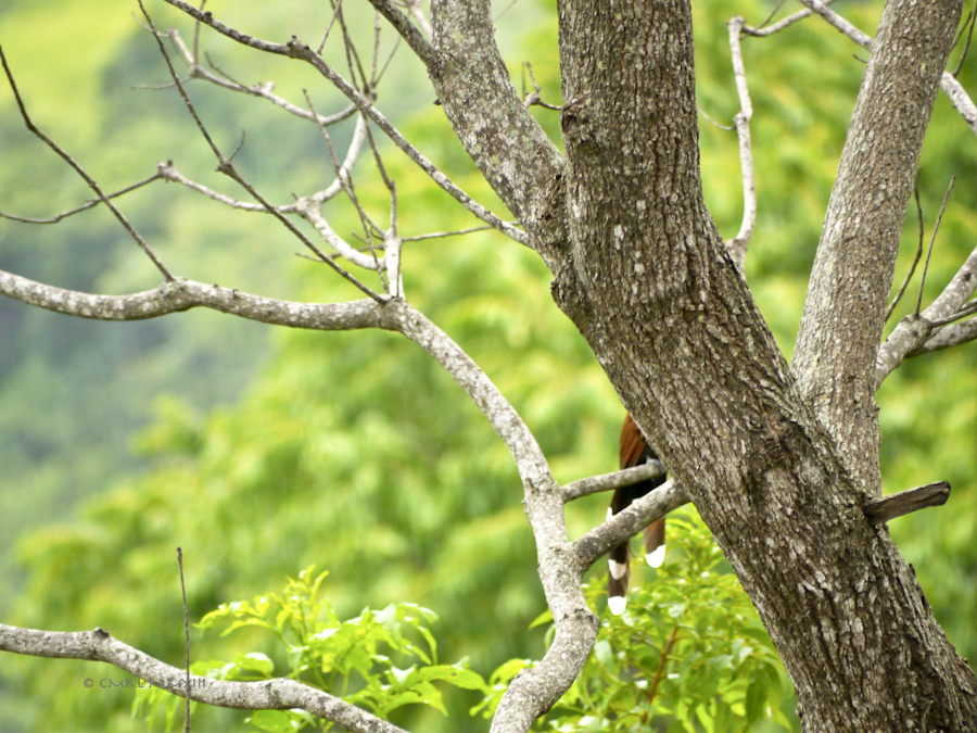b95c2-birding-03-1170638