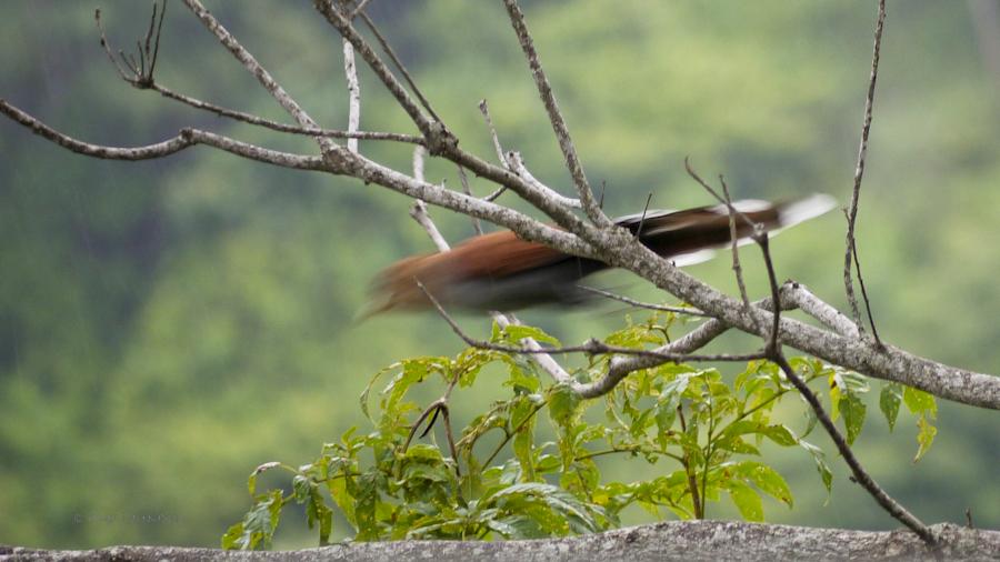 e1598-birding-06-1170641