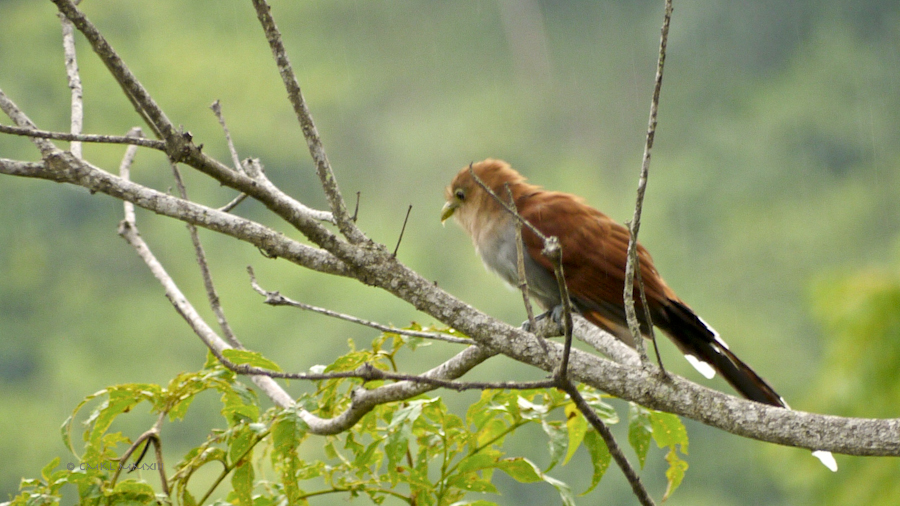 f76cb-birding-04-1170639