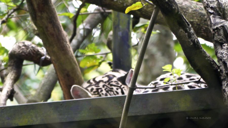 0e431-zoo-ave-27-1180886