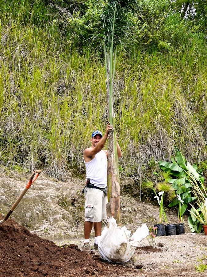 11ad9-planting-07-1190318
