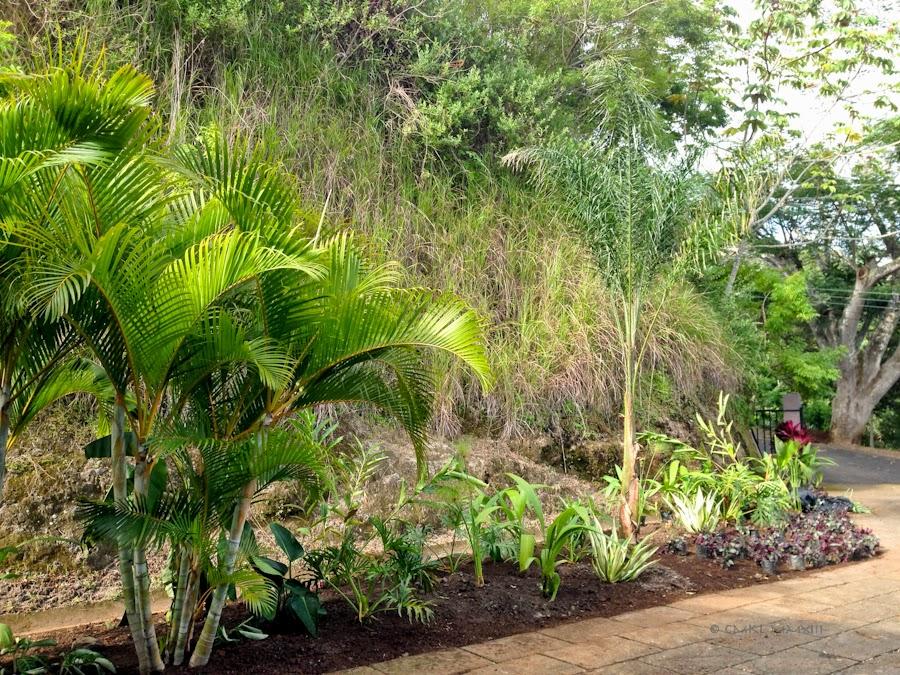 1da50-planting-08-3837