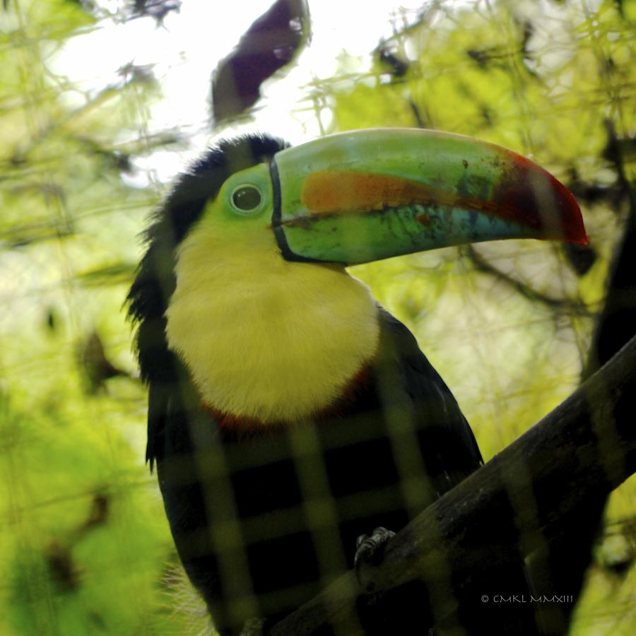 8b446-zoo-ave37-1190055