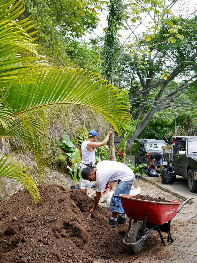 b686e-planting-06-1190316