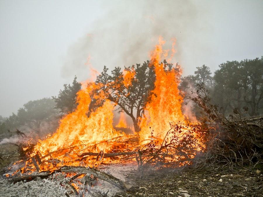 e1c60-bonfire-06-1210434