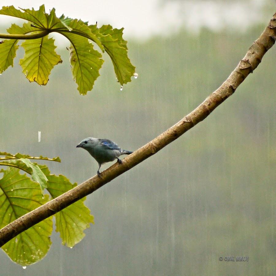 24b4c-wetter-bluebird-1260920