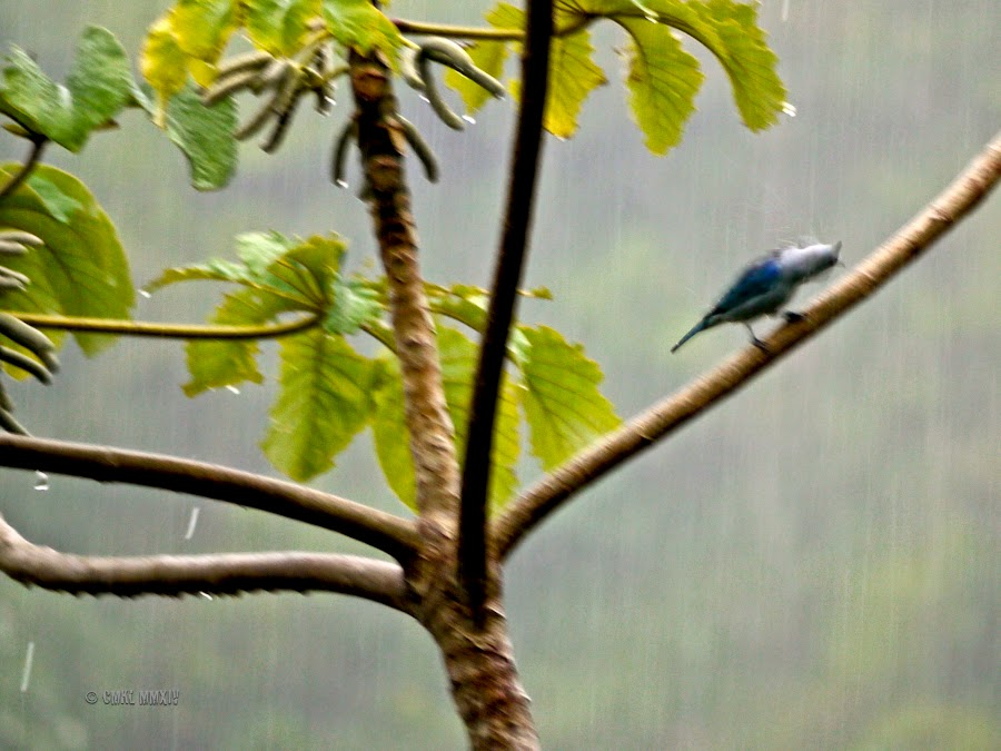 46511-wettest-bluebird-1260917