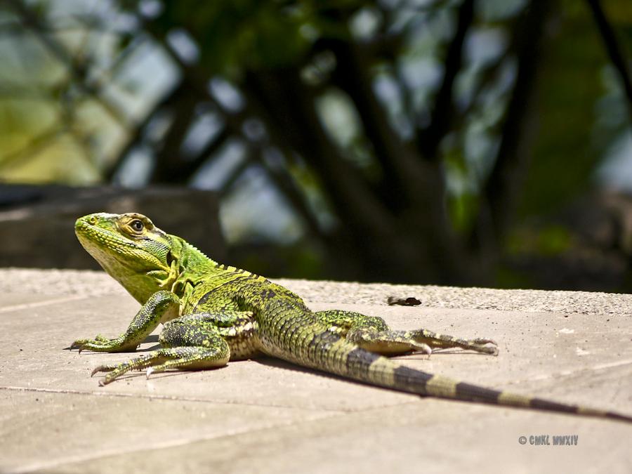 Veragua Rainforest & amp; Research