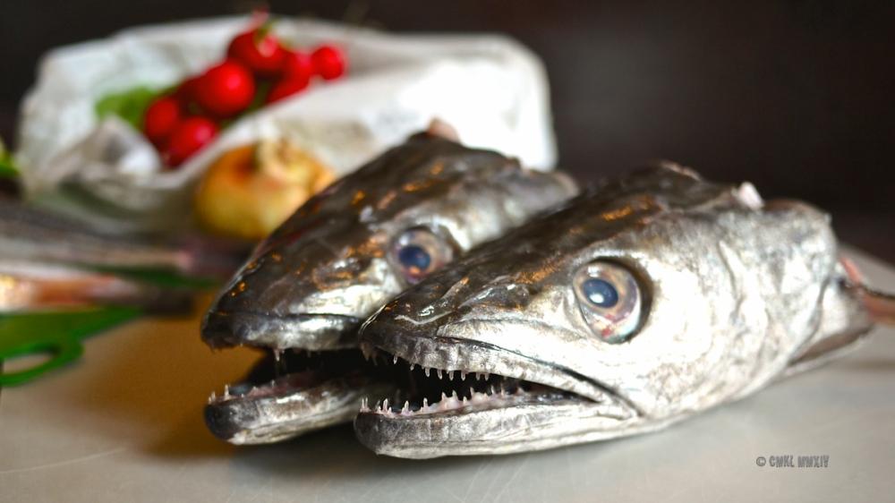 Fish.01-1290253
