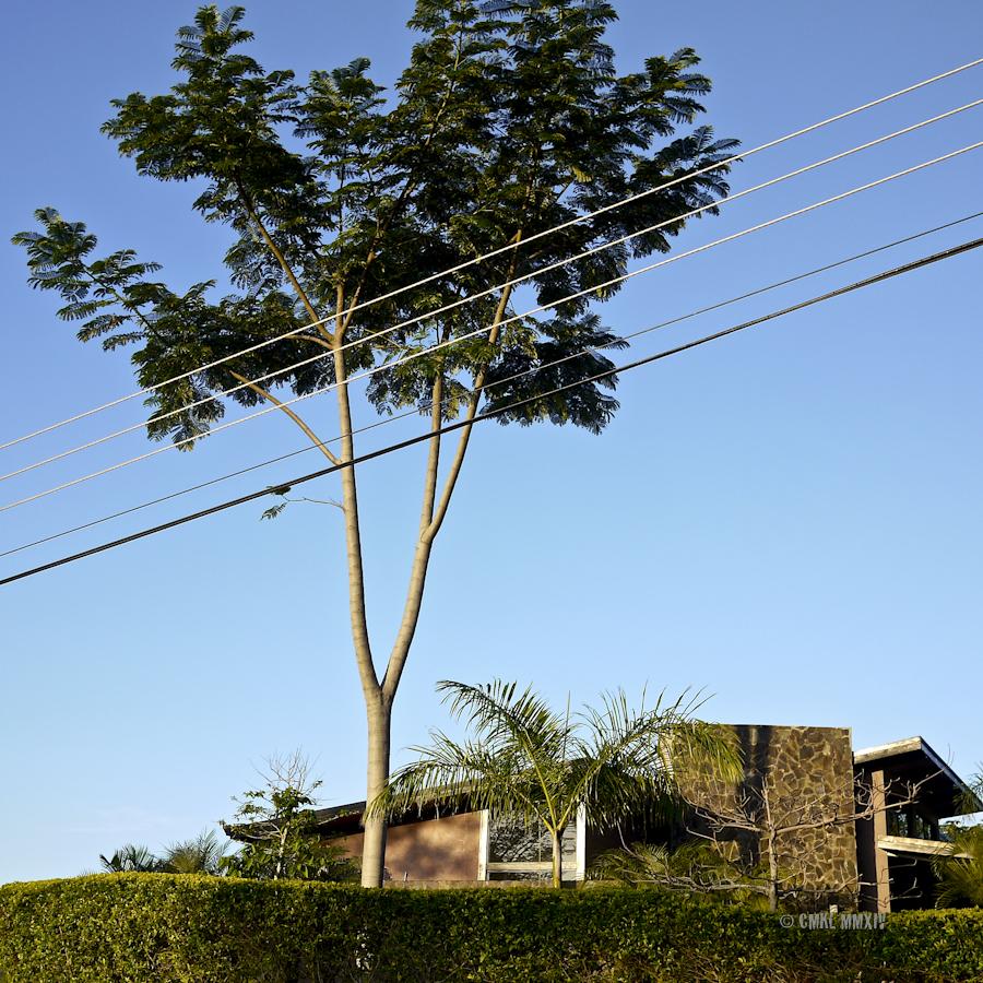 Jacaranda.03-1270834