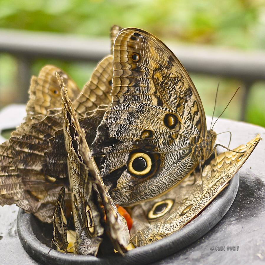 LaPaz.Lepidoptera.04-1270987