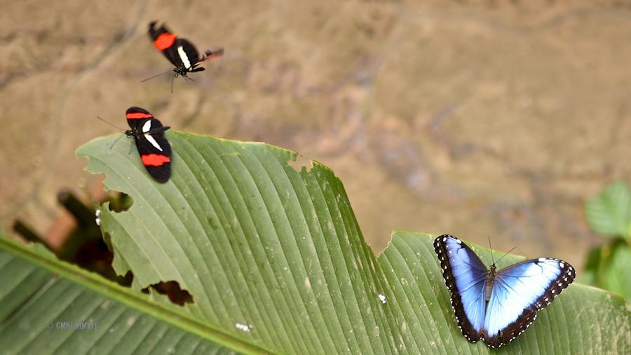 LaPaz.Lepidoptera.05-1270997