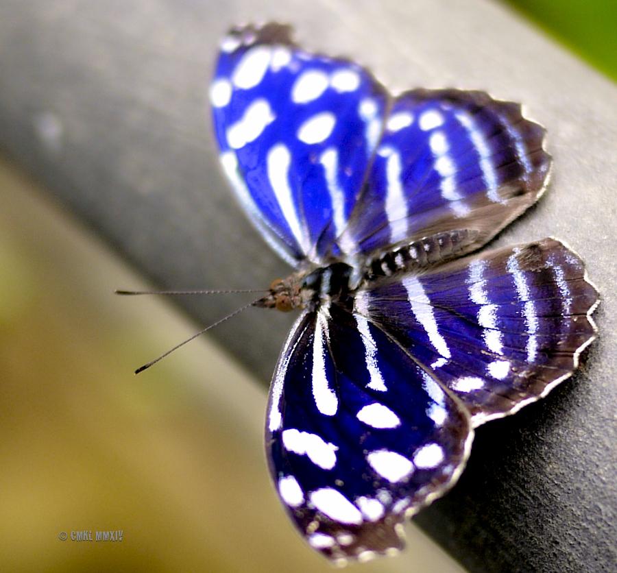 LaPaz.Lepidoptera.06-1280002