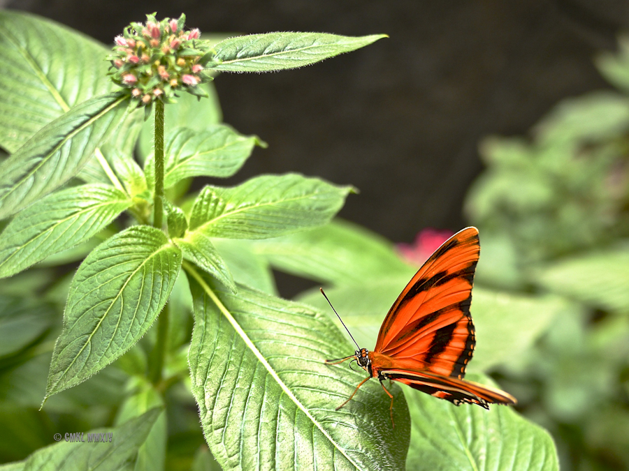 LaPaz.Lepidoptera.07-1280006