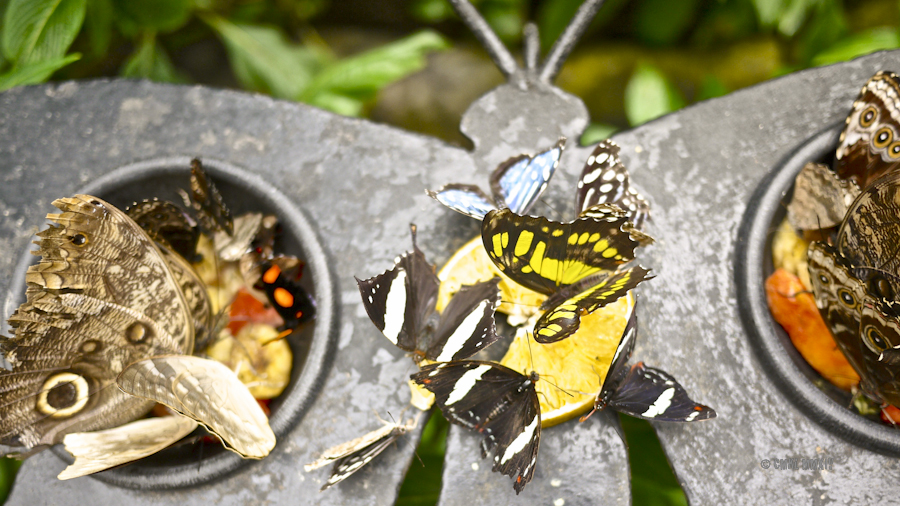 LaPaz.Lepidoptera.08-1280018