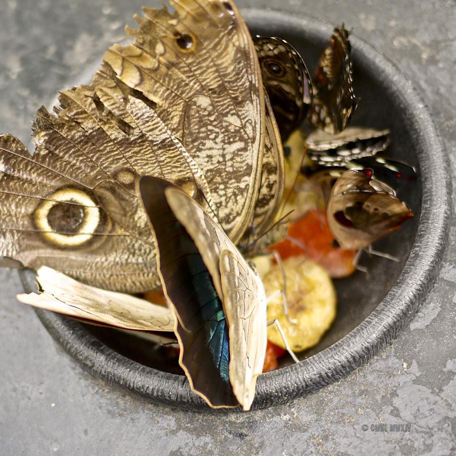 LaPaz.Lepidoptera.10A-1280045