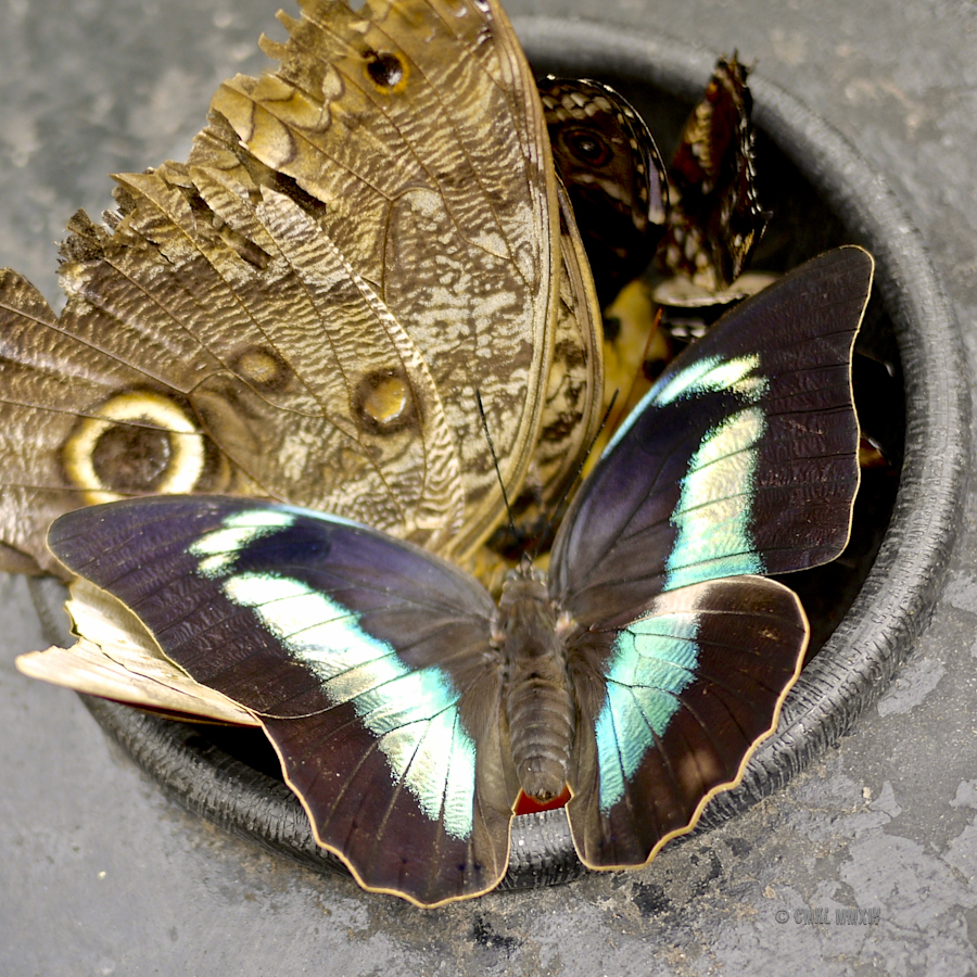 LaPaz.Lepidoptera.10B-1280046