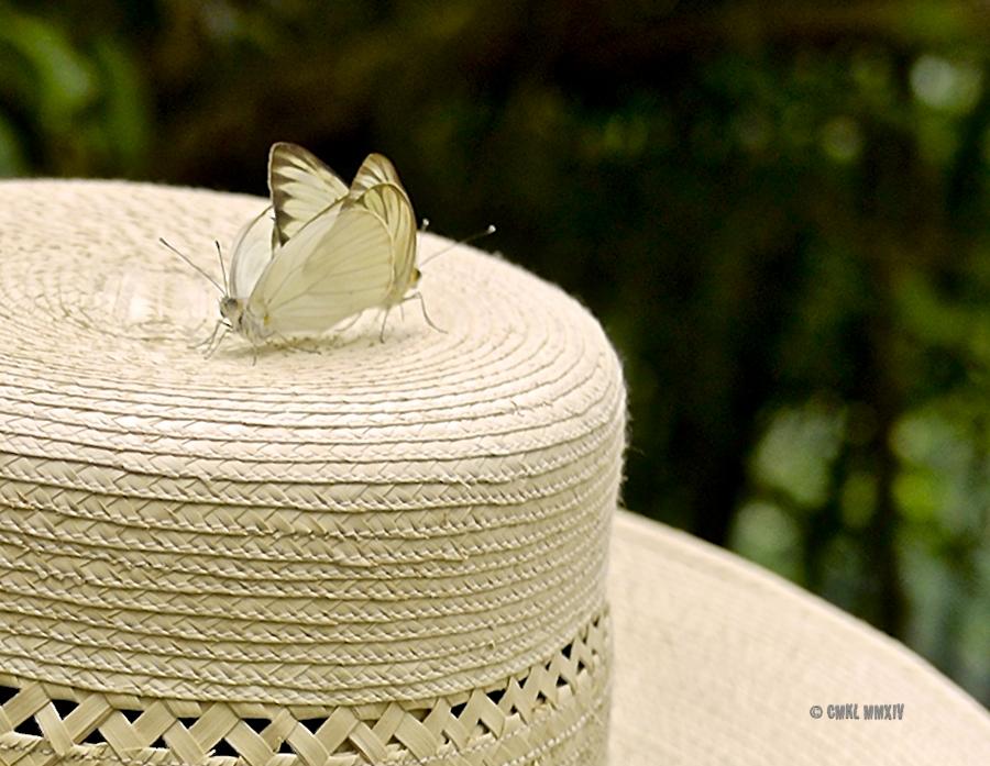 LaPaz.Lepidoptera.13-1280102