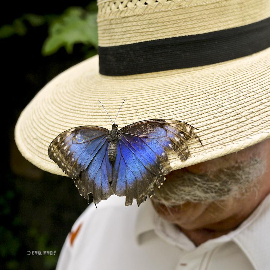 LaPaz.Lepidoptera.14-1280105
