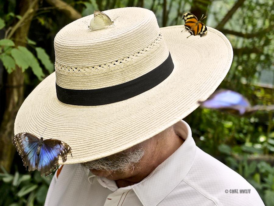 LaPaz.Lepidoptera.15-1280108