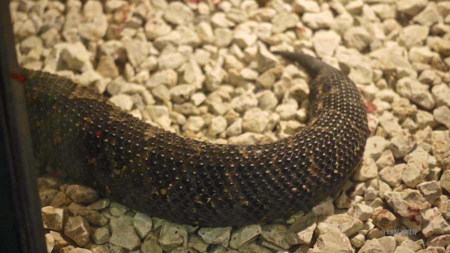 LaPaz.Ophidia.02B-1280159