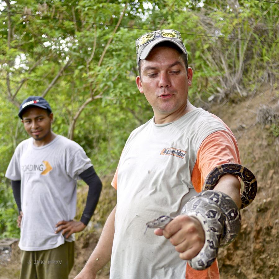 Snake.06-1370386