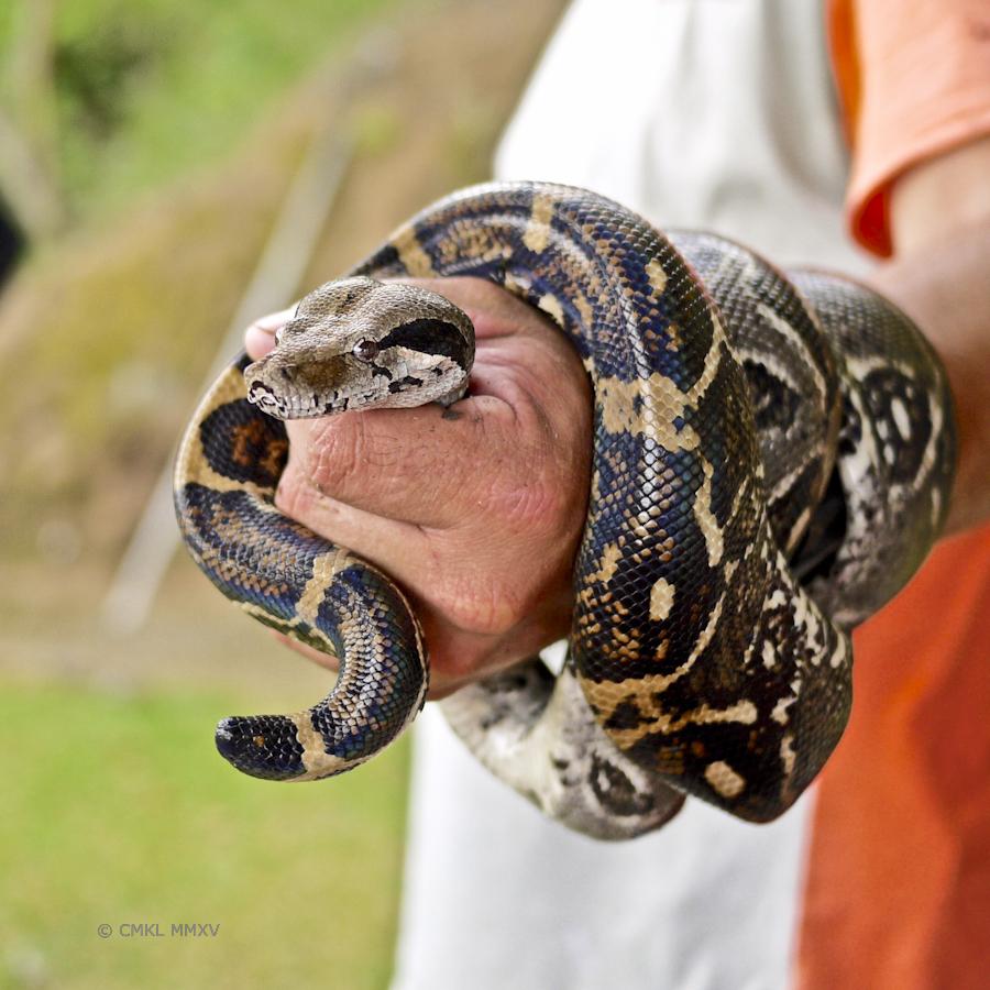 Snake.08-1370401