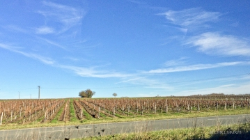 ... and the vines of the famous Bordelaise region.