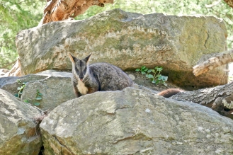 Home.Exchange.Melbourne.Healesville.Sanctuary
