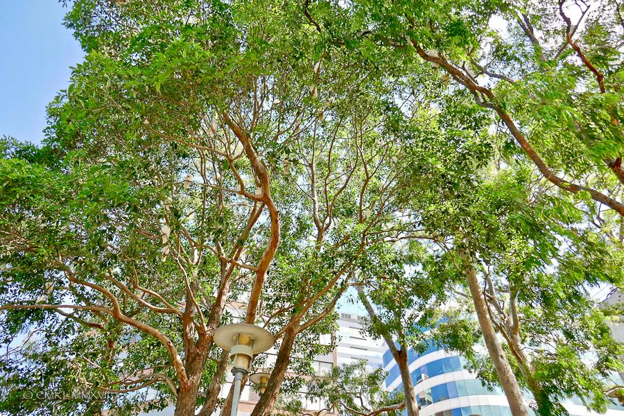 Sydney.Home.Exchange.168-1160746