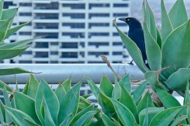 Sydney.Home.Exchange.78-1150367