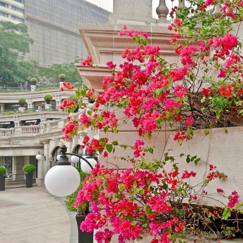 Home.Exchange.HongKong.14-1190524