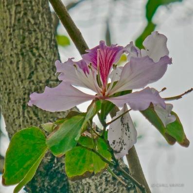 Flower.HK-1190518