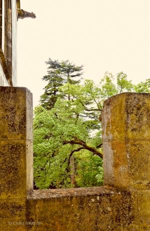 Mirambeau.14-1310833