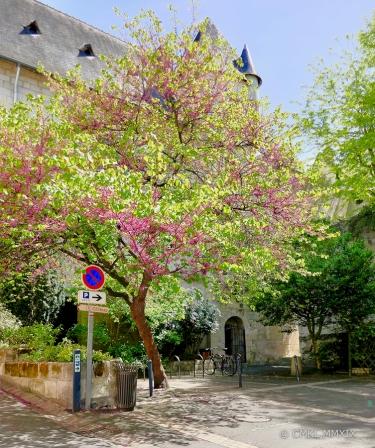 Saumur.22-1350518